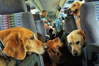 animales en avion