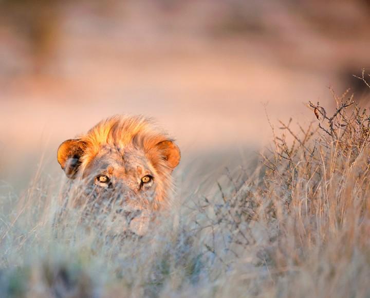 alrededordelmundo fotos leones zoo 2