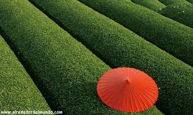 jardines te chino
