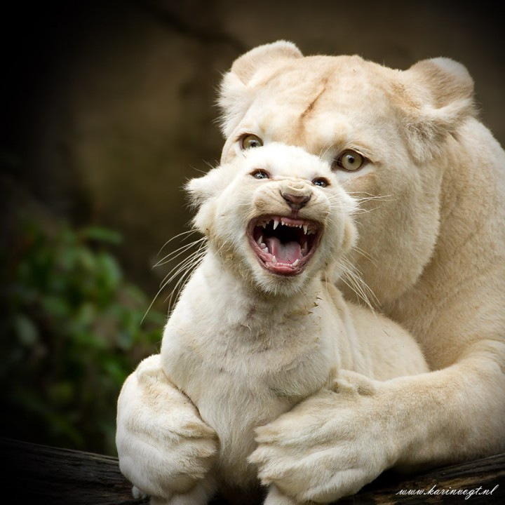 leon con su hijo