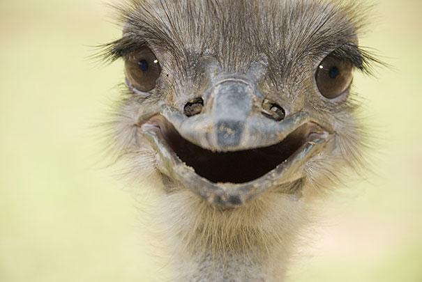 animales graciosos riendo 14