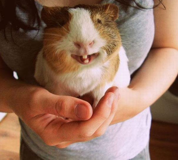 animales graciosos riendo 19