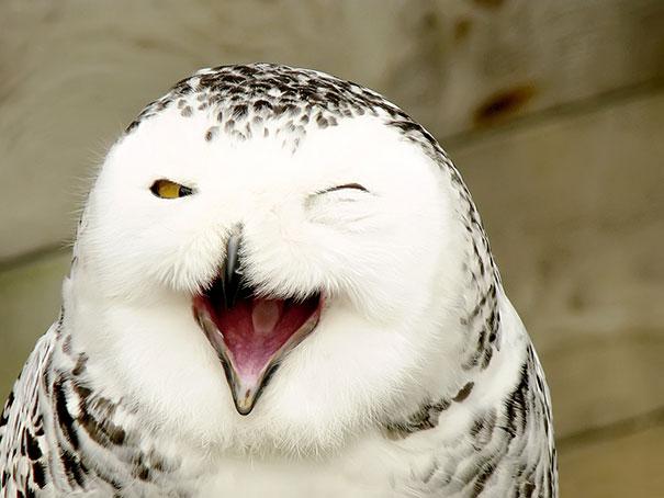 animales graciosos riendo 21
