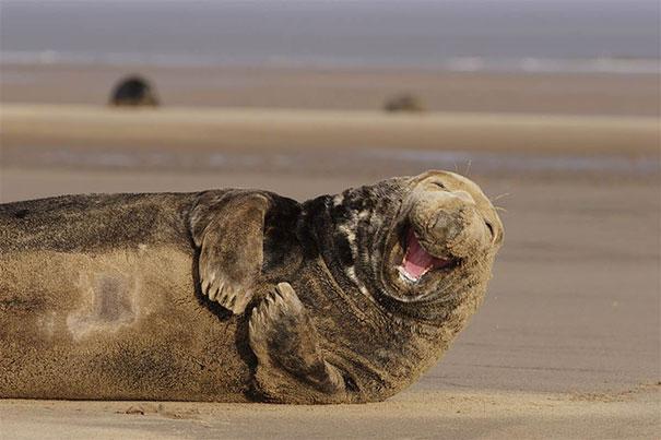 animales graciosos riendo 22