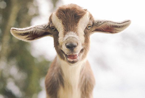 animales graciosos riendo 28