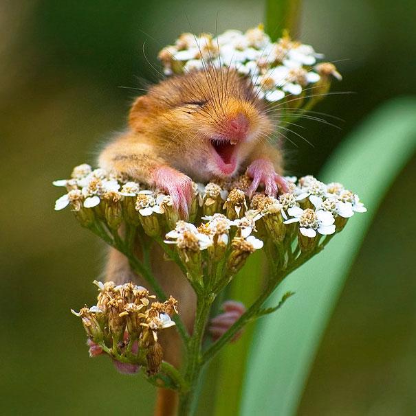 animales graciosos riendo 3