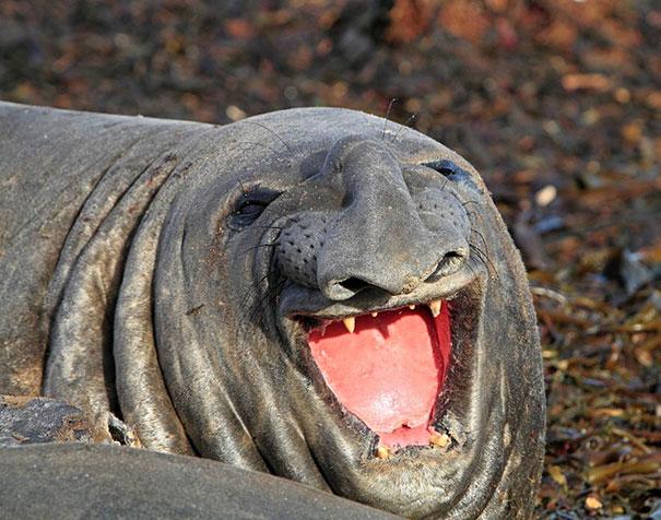 animales graciosos riendo 8