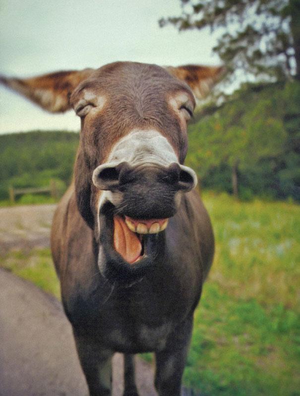 animales graciosos riendo 9