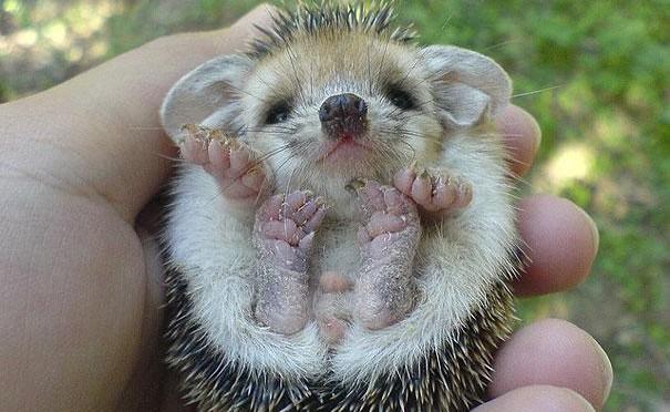 23 Animales lindos de bebés 1
