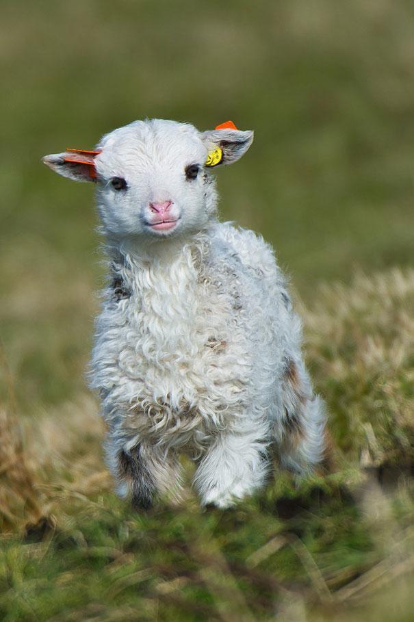 23 Animales lindos de bebés 12