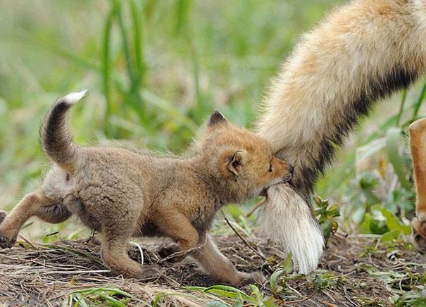 23 Animales lindos de bebés 18