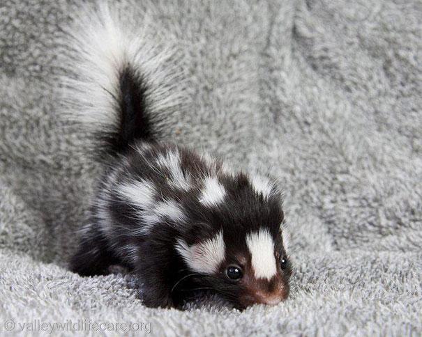 23 Animales lindos de bebés 21