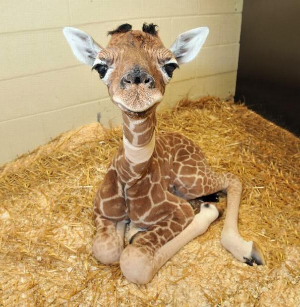 23 Animales lindos de bebés 3
