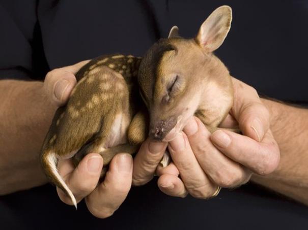 23 Animales lindos de bebés 5