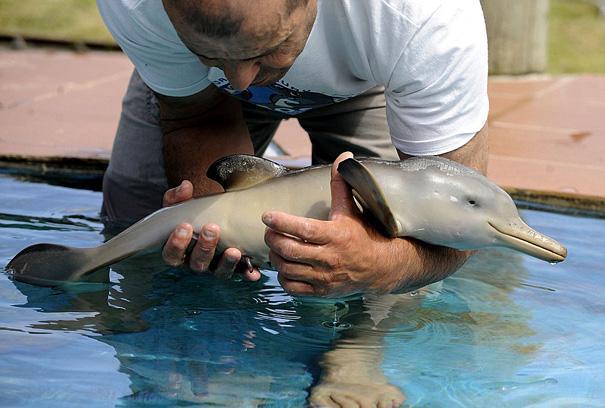 23 Animales lindos de bebés 7
