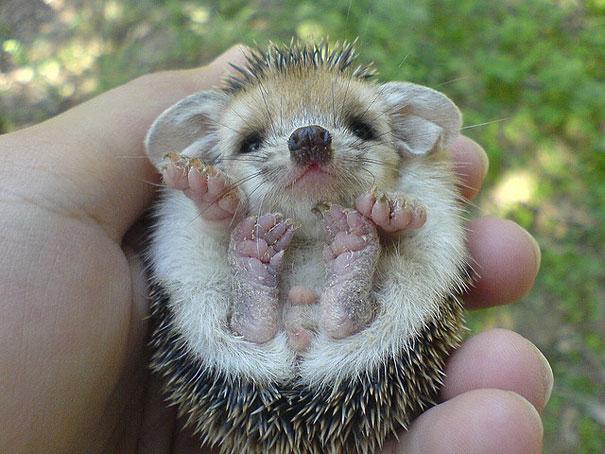 23 Animales lindos de bebés 8