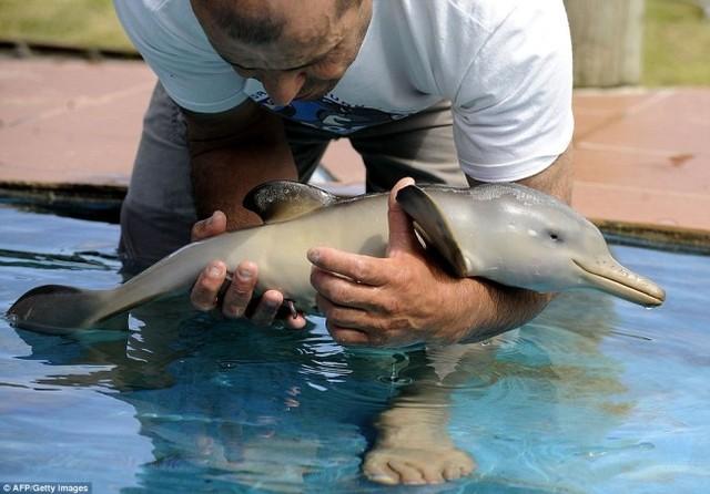 delfin cachorro 2
