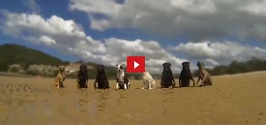 """12 Perros y 1 Gato Pasean Por La Playa Al Ritmo De La Canción """"Happy"""""""