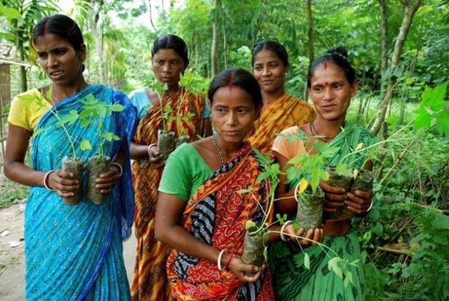 Un pueblo en la INDIA planta 111 árboles cada vez que nace una niña , tierra verde 1