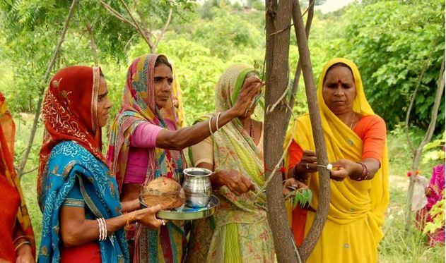 Un pueblo en la INDIA planta 111 árboles cada vez que nace una niña , tierra verde 2