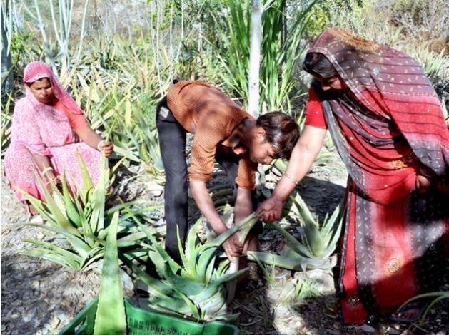 Un pueblo en la INDIA planta 111 árboles cada vez que nace una niña , tierra verde 5