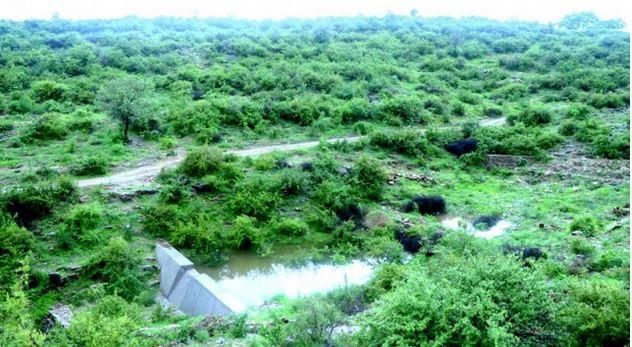 Un pueblo en la INDIA planta 111 árboles cada vez que nace una niña , tierra verde 7