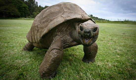 Conoce al animal más antiguo del mundo. 1