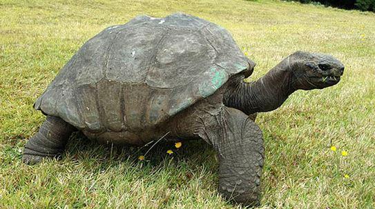 Conoce al animal más antiguo del mundo. 4
