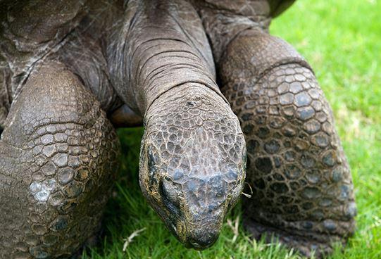 Conoce al animal más antiguo del mundo. 5