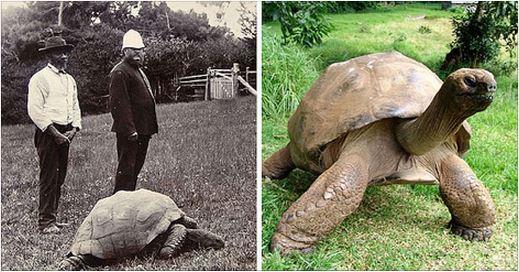Conoce al animal más antiguo del mundo.