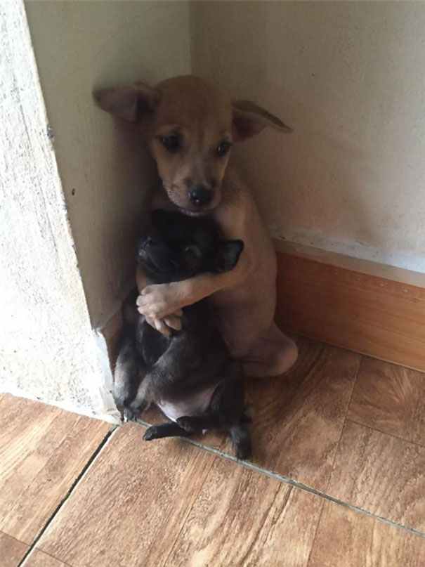 Perritos callejeros no paran de abrazarse desde que fueron rescatados 1