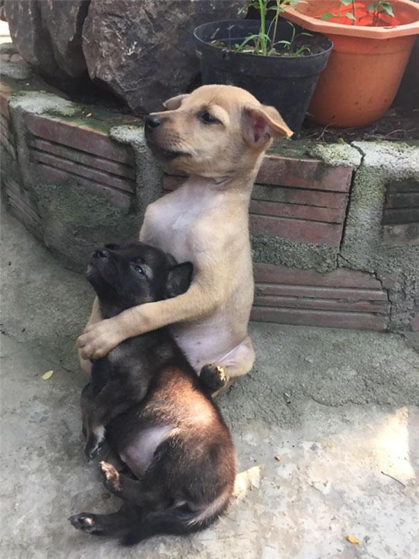 Perritos callejeros no paran de abrazarse desde que fueron rescatados 2