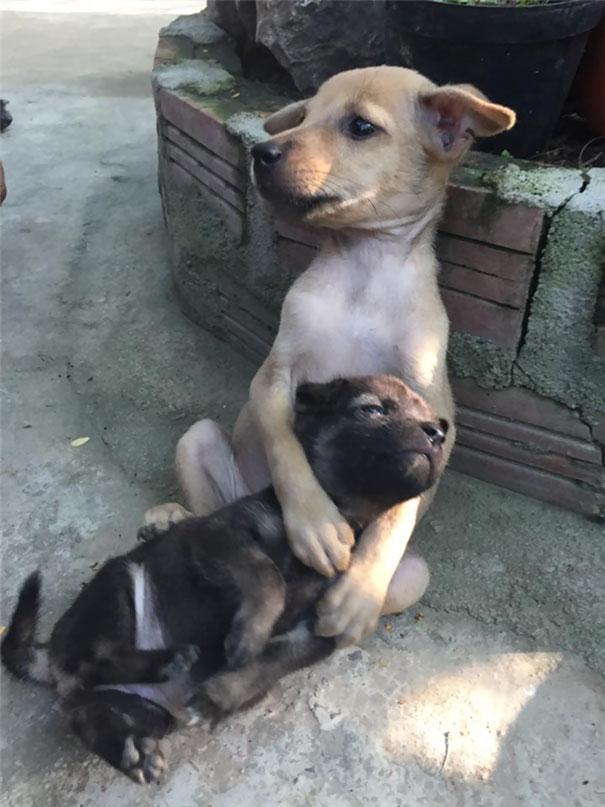 Perritos callejeros no paran de abrazarse desde que fueron rescatados 3