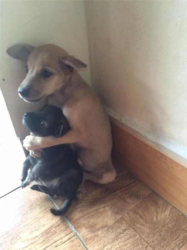 Perritos callejeros no paran de abrazarse desde que fueron rescatados 4