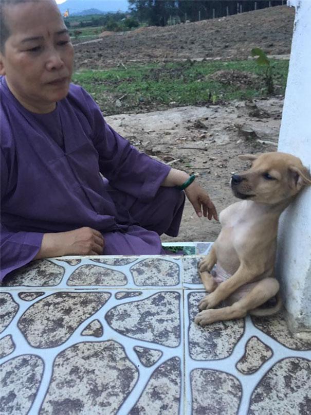 Perritos callejeros no paran de abrazarse desde que fueron rescatados 8